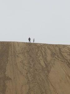 Te Pake Giant Sand Dunes.